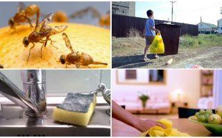 Πώς να απαλλαγείτε από τις μικρές μύγες στο διαμέρισμα