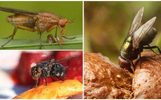 Τι μύγες τρώνε