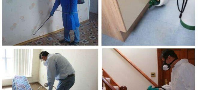 Απεντόμωση από ψύλλους στο διαμέρισμα με επαγγελματικές υπηρεσίες