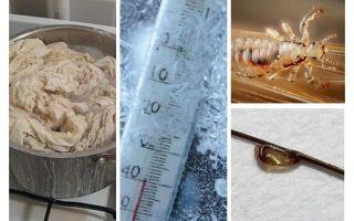 Σε ποια θερμοκρασία πεθαίνουν οι ψείρες και τα νιτς;
