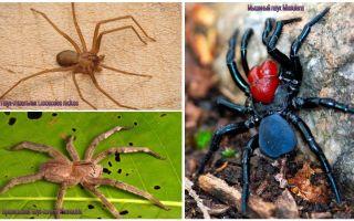 Περιγραφή και φωτογραφίες των πιο επικίνδυνων αράχνων στον κόσμο