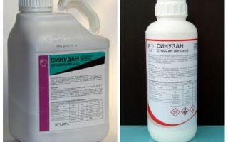 Sinuzan θεραπεία για bedbugs
