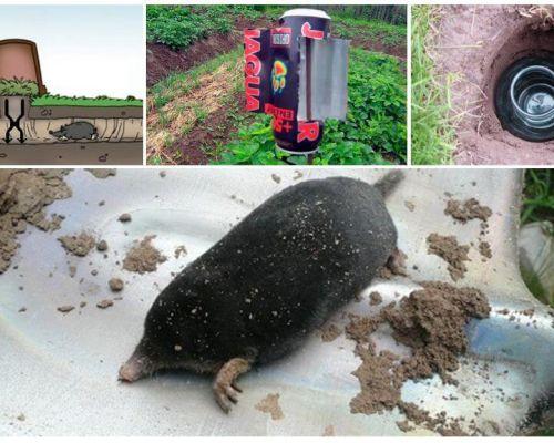 Καταπολέμηση των σκωληκοειδών στα λαϊκά διορθωτικά μέτρα
