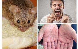 Τι μπορεί να μολυνθεί από ποντίκια