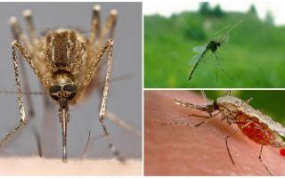 Πώς βλέπουν τα κουνούπια και τι τους προσελκύει σε ένα άτομο
