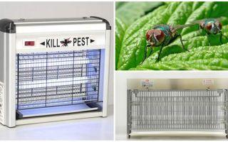 Πώς να κάνετε μια παγίδα για τις μύγες στο σπίτι