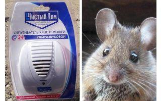 Υπερηχητικός κατασκοπεία από ποντίκια και ποντίκια Καθαριότητα