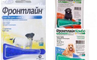 Πέφτει την πρώτη γραμμή από ψύλλους για σκύλους