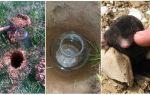 Πώς να πιάσει ένα mole σε κήπο