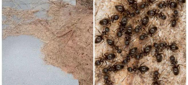 Πώς να απαλλαγείτε από τα μυρμήγκια στον τάφο