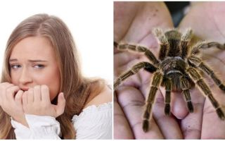 Ποιο είναι το όνομα του φόβου των αράχνων (φοβία) και των μεθόδων θεραπείας