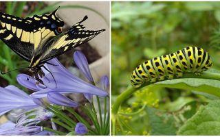 Μετατρέποντας μια κάμπια σε μια πεταλούδα