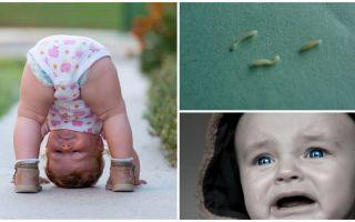 Τα συμπτώματα και η θεραπεία των τρωκτικών σε ένα παιδί