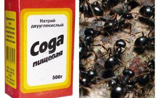 Σόδα κατά των μυρμηγκιών στον κήπο