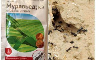 Ant remedy Οδηγίες και σχόλια τεχνητών μυκήτων