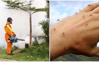 Μέσα για την επεξεργασία της περιοχής από τα κουνούπια και τα κρότωνες
