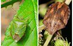 Είτε οι σπιτικές μουτζούρες είτε οι μυρμηγκοί μυρωδιές
