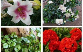 Ποια λουλούδια φοβίζουν τον μώλο