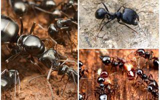 Ψεκαστήρες μυρμηγκιών