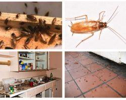 Απαλλαγείτε από τις κατσαρίδες στο διαμέρισμα μια για πάντα