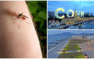 Υπάρχουν κουνούπια στο Σότσι και στο Adler