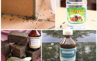 Καταπολέμηση μυρμηγκιών σε σπίτι ή διαμέρισμα
