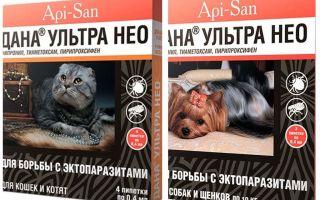 Η Dana Ultra Neo πέφτει από ψύλλους για γάτες και σκύλους