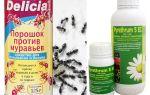 Δηλητήριο δηλητήριο σε διαμέρισμα ή σπίτι