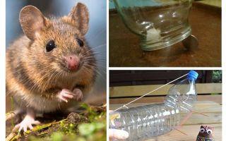 Πώς να πιάσετε ένα ποντίκι σε ένα σπίτι χωρίς ποντικοπαγίδα