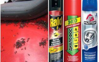 Πώς να πάρει τα μυρμήγκια έξω από το αυτοκίνητο