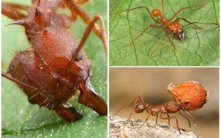 Τα μυρμήγκια αποδίδουν