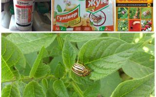 Τα πιο αποτελεσματικά δηλητήρια και δηλητήρια από το σκαθάρι της πατάτας του Κολοράντο