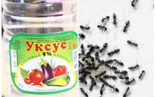 Ξύδι κατά των μυρμηγκιών στον κήπο