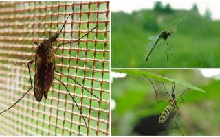 Πόσο ψηλά τα κουνούπια και οι μύγες πετούν