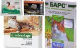 Σταγόνες στο άκρο από ψύλλους για γάτες και γατάκια