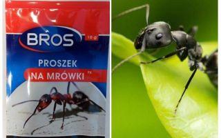 Μέσα Πέτα μυρμήγκια