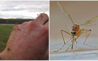 Σε ποιες χώρες και πόλεις δεν υπάρχουν κουνούπια