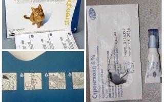 Οι καλύτερες σταγόνες στο ακρώμιο για γάτες από ψύλλους και σκουλήκια