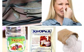 Πώς να απαλλαγείτε από τη μυρωδιά των ποντικών