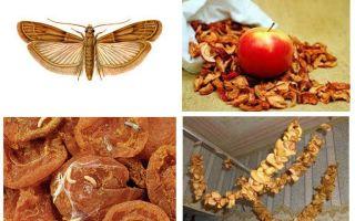 Τι πρέπει να κάνετε αν ξεκινήσει η μοσχαρίδα στα αποξηραμένα μήλα