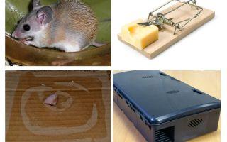 Πώς να αφαιρέσετε ποντίκια από μια ιδιωτική κατοικία