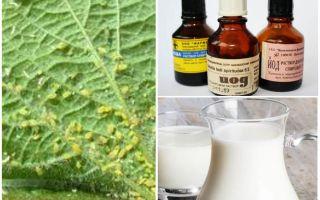 Γάλα με ιώδιο από αφίδες