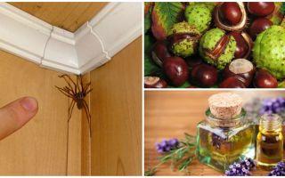 Μέθοδοι και εργαλεία για αράχνες σε διαμέρισμα ή ιδιωτικό σπίτι