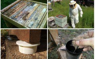 Πώς να απαλλαγείτε από τα μυρμήγκια στο μέλι διορθωτικά μέτρα μελισσοκομίας