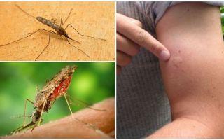 Τι πρέπει να κάνετε εάν δαγκώσετε από ένα κουνούπι anopheles