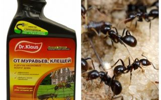 Ο κ. Klaus από τα μυρμήγκια και τα κρότωνες
