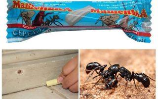 Μολύβι Masha από τα μυρμήγκια