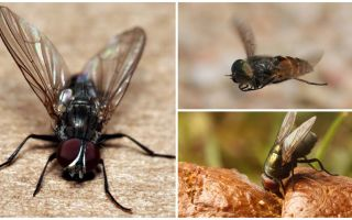 Όπου οι μύγες προέρχονται από εσωτερικούς χώρους
