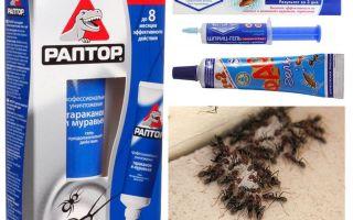 Τα καλύτερα προϊόντα μυρμηγκιών