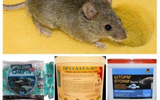 Δηλητήριο από ποντίκια